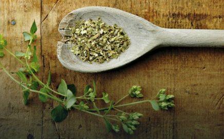 Oregano – przyprawy do potraw z grilla