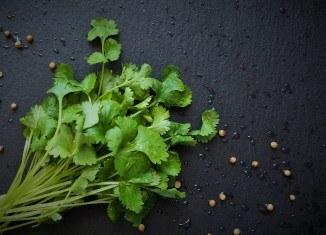 Przyprawy dopotraw zgrilla – kolendra