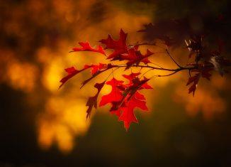 Jesienny sezon grillowy – inspiracje