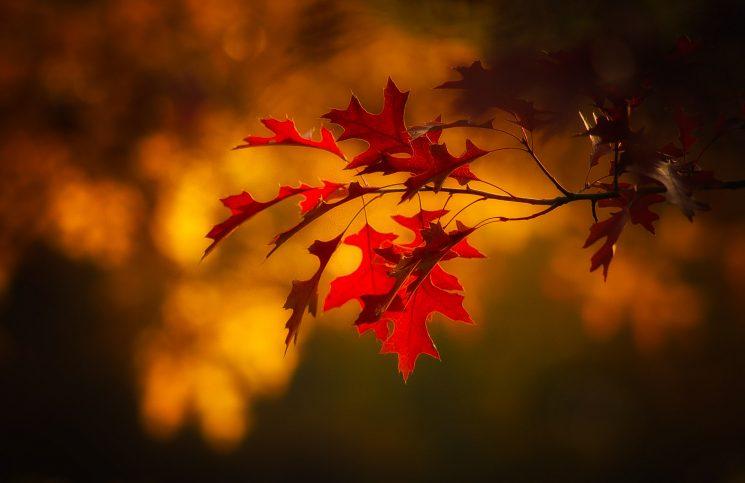 Inspiracje grillowe na jesień – dodatki, owoce, trunki